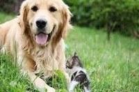 vakantiehuis met hond omheinde tuin